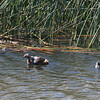 HOGR- Cache Creek_BC- 002