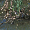 LEGR_01- Muleje-Baja- 2-2004