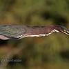 Heron Planking