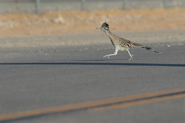 Ground and Unusual Birds