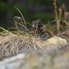 IMG_6615 - Nesting