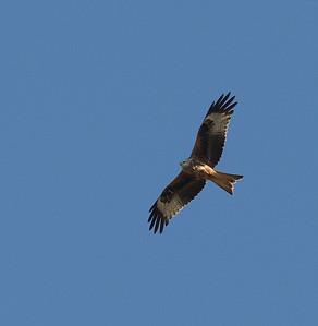 19.2.2012 Castro Verde, Portugal