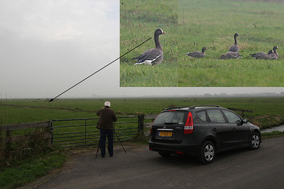 24.10.2012 Strijen, The Netherlands  Flock of 36 birds