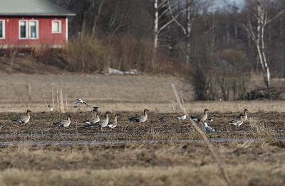 15.4.2011 Vantaa, Finland
