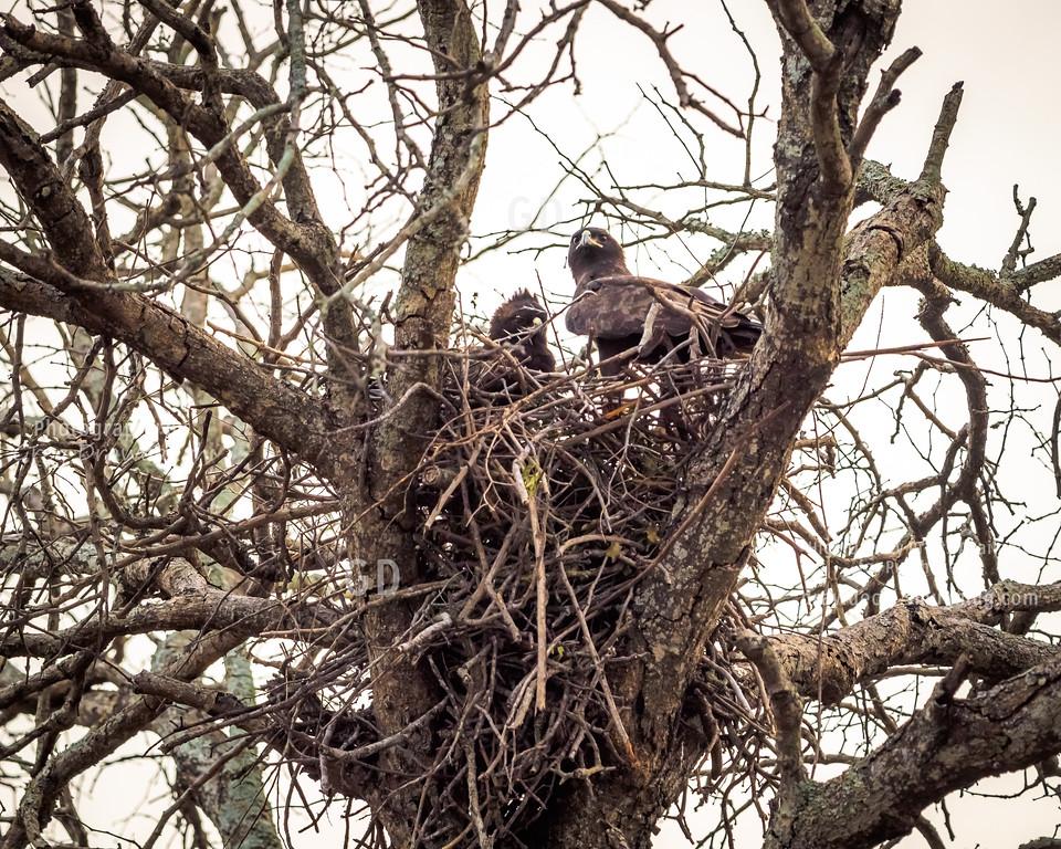 Wahlberg's Eagles