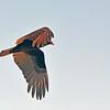 <b>Title - Turkey Vulture</b> <i>- Harvey Mendelson</i>