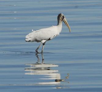 South Salton Sea, Imperial Valley, 08/26/06