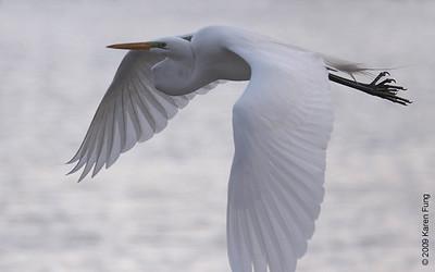 April 5th: Great Egret in Central Park (Meer)