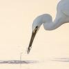 D Stowe_Little Egret-7034-2