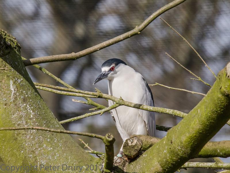 Seen at Birdworld, Farnham