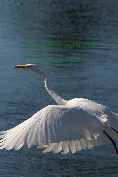 Heron5243 copy