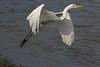 HeronFly1958(8x12)