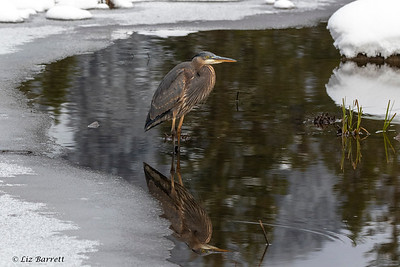 0U2A2173_Heron Reflections