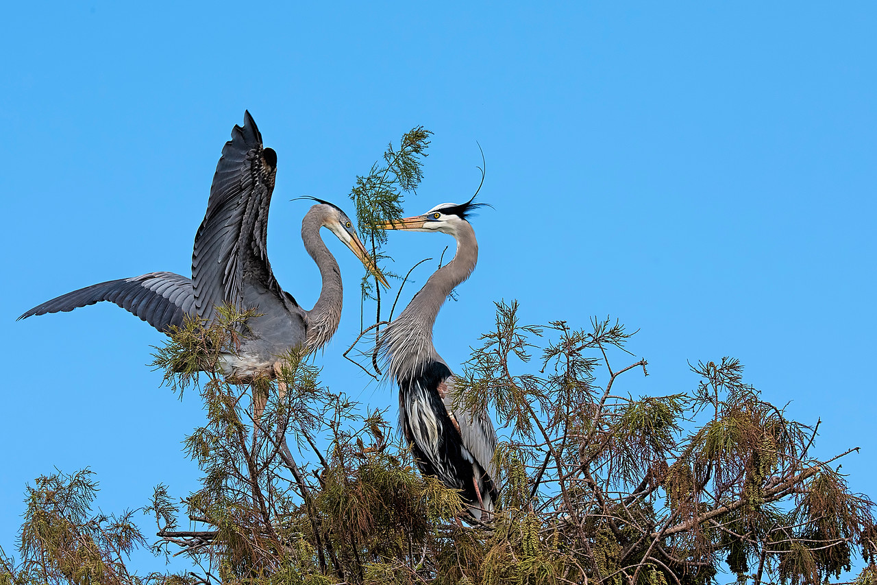 Nesting Couple  #1393