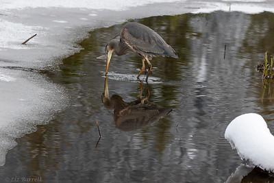0U2A2281_Heron reflections