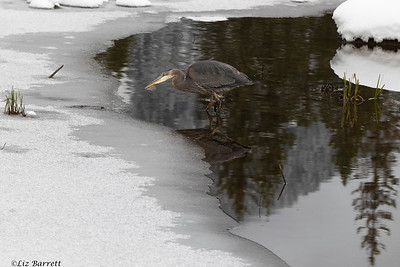 0U2A2195_Heron_Reflections