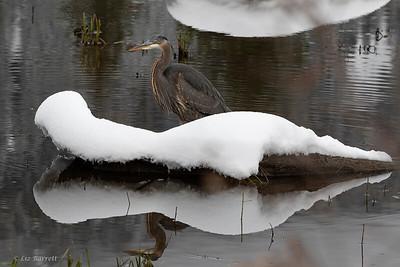 0U2A2234_Heron Reflections