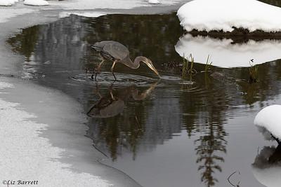 0U2A2153_Heron_Reflections