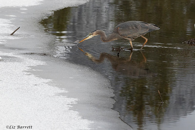 0U2A2160_Heron Reflections
