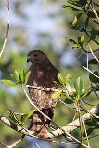 December 2009, Everglades national Park, Florida