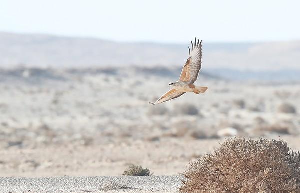 3.3.2020 Western Sahara