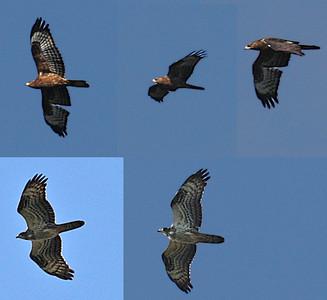 16.9.2012 Helsinki, Finland  1cy birds
