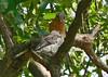 Mother Bluebird feeds one of her girls