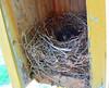 Eastern Bluebird Family Nest