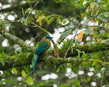 Honduras Birding 2014