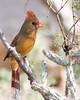 Birds : 1 gallery with 76 photos
