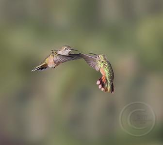 Birds in Battle