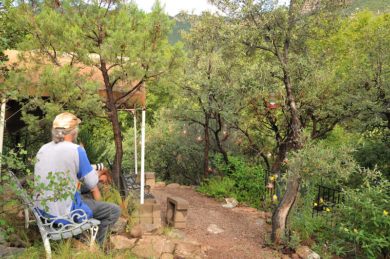 the hummingbird viewing site at Beatty's Guest Ranch,Miller Canyon,AZ,2009