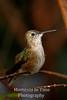 Sunlit hummingbird v