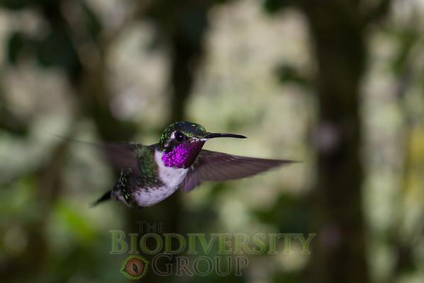 Biodiversity Group, _MG_0135