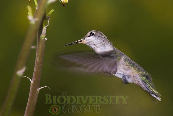Biodiversity Group, _DSC6796