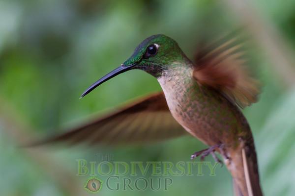 Biodiversity Group, _MG_9941