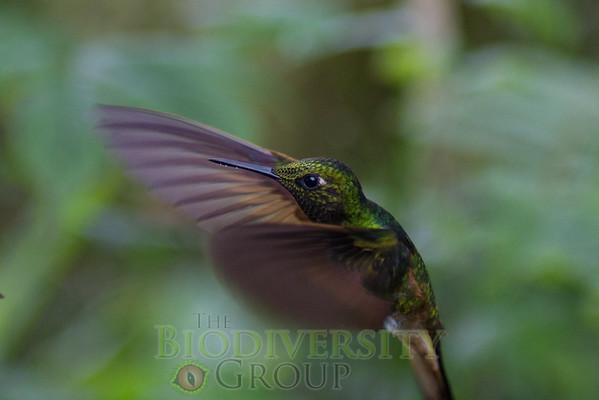 Biodiversity Group, _MG_9910