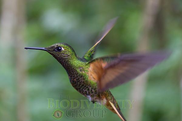 Biodiversity Group, _MG_9962