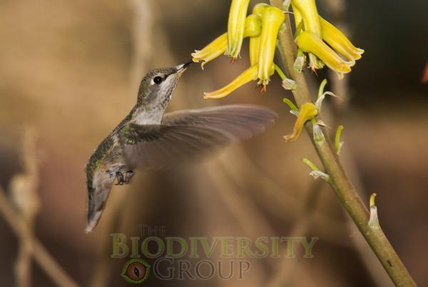 Biodiversity Group, _DSC6793