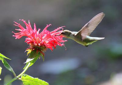 Hummingbirds and Bluebirds