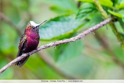 Snowcap - Cartago, Costa Rica