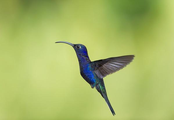 All bird galleries