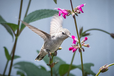 Birds and Flowers-7272