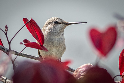 Birds and Flowers-7275