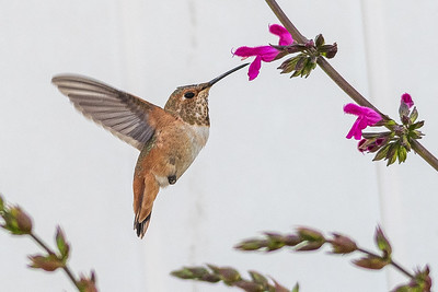 Birds and Flowers-7352