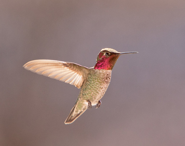 One winged hummer?