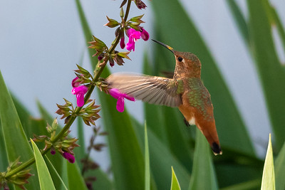 Birds and Flowers-7295