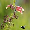 Bee-SMPRG8I0504-Edit