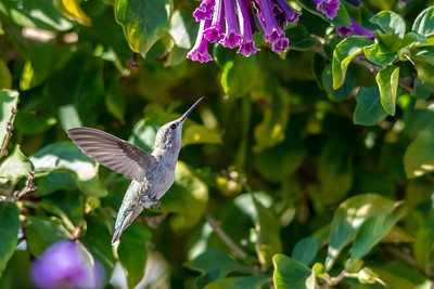 Birds and Flowers-7384