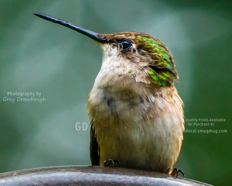 Hummingbird Takes a Break